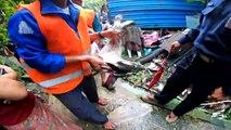 Birmanie: Rangoun chasse ses chiens errants