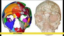 Mysterious skull found in Greece puts a twist on early human migration