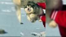 Cutest Puppies Ever In The World - Funny Videos Of Puppies - Puppies TV