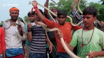 Indian devotees carry hundreds of snakes in bizarre procession during Hindu festival
