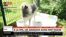 Spéciale Canicule : A la SPA, les bénévoles prennent soin des animaux qui souffrent de chaleur - VIDEO