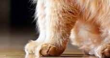 New York est devenu le premier État américain à interdire le dégriffage des chats