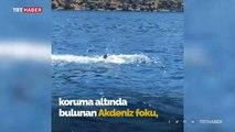 Kekova'da görülen Akdeniz fokunun balık keyfi