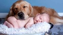 Best Of Funny Cats And Dogs Love Babies Compilation 2015 -- NEW