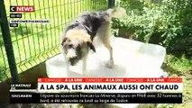 Spéciale Canicule : A la SPA, les bénévoles prennent soin des animaux qui souffrent de chaleur - VID