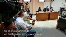 Por primera vez en América Latina un perro asiste a un juicio como víctima de maltrato