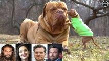 Justice League ★ Pets of Cast