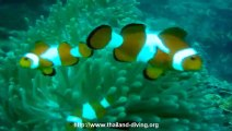 Coral diving in coron philipine island with diving center Thailand Diving Club Pattaya