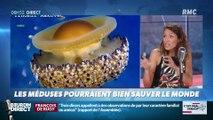 La chronique de Nina Godart : Les méduses pourraient bien sauver le monde - 24/07