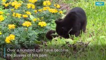Sleepy, soft and oh-so-relaxing: Over 100 cats in Lima's central park