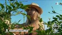 Alpes-Maritimes : au cœur de la récolte du jasmin