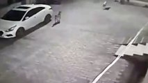 Perro callejero salva la vida a un bebé abandonado