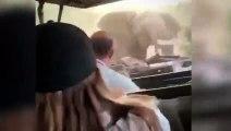 Terrorífica embestida de frente de un elefante a un jeep