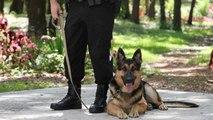 Cómo se adiestran los perros policía