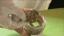 L'Allemagne doit faire face à un manque de cannabis médicinal