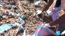 Le trafic de viande du pangolin en Côte d'Ivoire