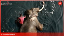 Explained: Where Are India's 2,454 Captive Elephants, And With Whom
