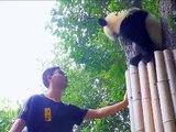Ce panda et son maître vont vous faire rigoler. A voir !