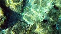 LE CAP D'AGDE - A la découverte du sentier sous-marin
