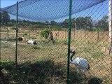 Corsica Zoo