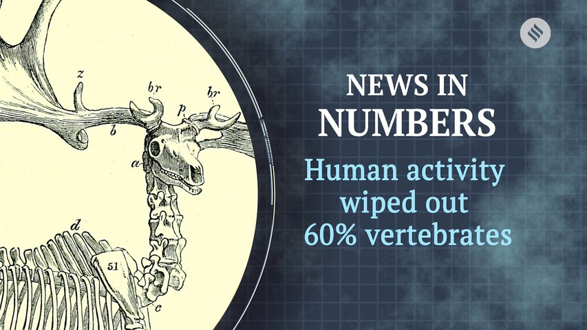 Human activity wiped more than half of the world's vertebrates: News in Numbers