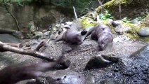 Orphaned river otters meet for the first time