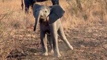 Unfassbar süß: Baby-Elefant will Touristen erschrecken