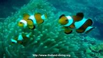 plongee corail a coron aux iles philippines avec le centre de plongee Thailand Diving Club Pattaya