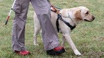 Todo lo que siempre has querido saber sobre los perros guía