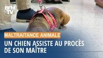 Maltraité par son ancien propriétaire, un chien assiste à son procès