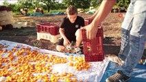 Yeni Malatyaspor'da kayısılı forma tanıtımı