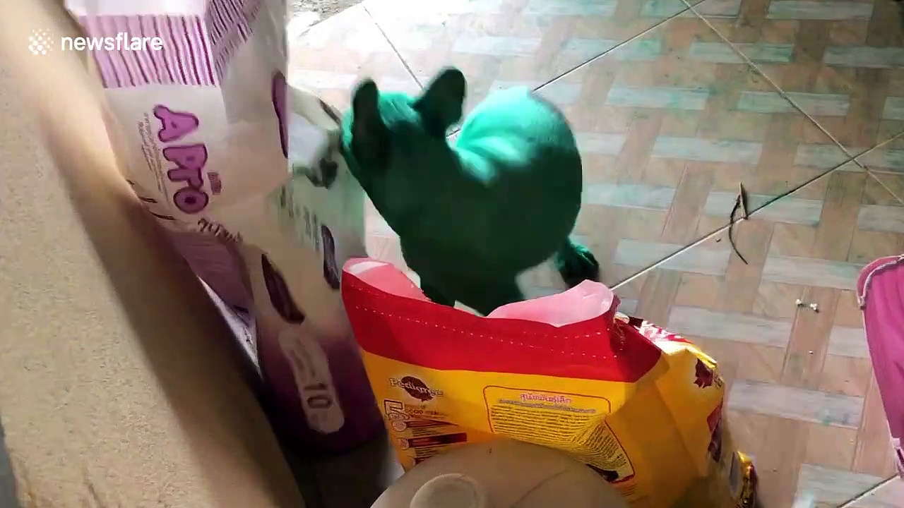 Naughty French bulldogs paint themselves GREEN after raiding food colouring from kitchen