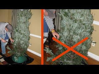 Estas árvores de Natal não secam.