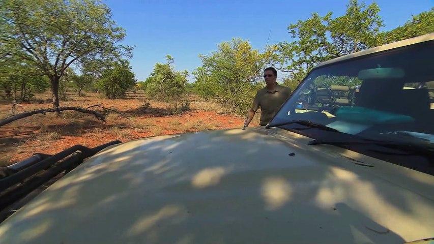 il faut sauver les rhinocéros noirs  teaser
