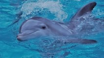 Tourists in Spain Killed a Baby Dolphin After Taking It Out of the Water for Selfies