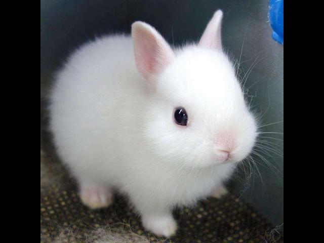 Funny Baby Bunny Rabbit Videos Compilation – Cute Rabbits