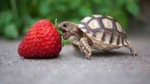 Turtle / Tortoise - A Funny Turtle And Cute Turtle Videos Compilation 2017