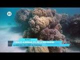 Para 2050 no existirán los corales; reportaje de El Heraldo TV