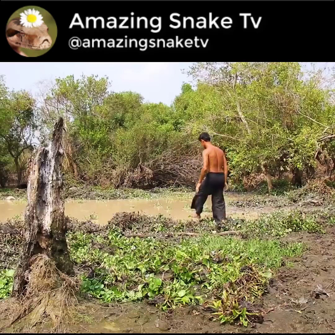 Build Snake Pond And Lift Up Hundreds Of Water Snakes From Dried Up Pond