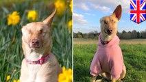 Anjing ditembak 17 kali dam buta kini jadi anjing terapi - TomoNews
