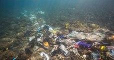 La Méditerranée est la mer la plus polluée d'Europe avec près de 200 déchets par km2