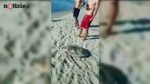 Tartaruga disturbata dai bagnanti. L'appello del Wwf: lasciatele in pace | Notizie.it