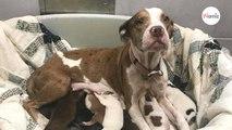 Une maman chien jetée dans un refuge avec ses 10 chiots retrouve aujourd'hui le sourire