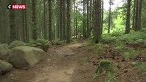 Haut-Rhin : un sentier pieds nus pour se reconnecter avec la nature