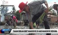 Tanam Ribuan Bibit Mangrove di Hari Mangrove Sedunia