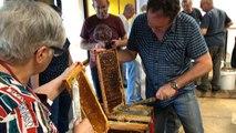 Récolte du miel municipal
