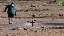 Héros du jour : il sauve une impala coincée dans la boue