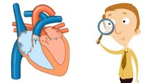 Human Heart for Kids Body Function Facts Video