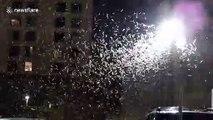 The grasshopper invasion of Las Vegas continues