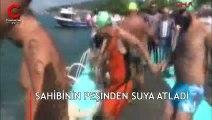 Yüzme yarışında ilginç görüntü... Sahibinin peşinden suya atladı